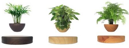 plv présentoir à lévitation - pots de fleurs lévitant au dessus de leur base en bois